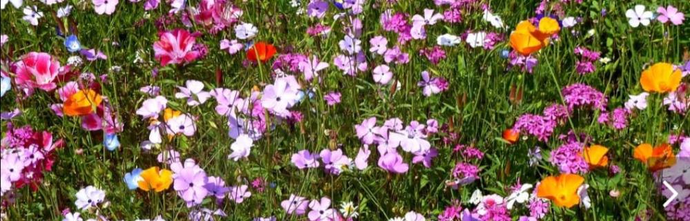 Virágokról, fűről, fáról - Szigeti Zoltán könyvbemutatója a Budafoki Könyvtárban